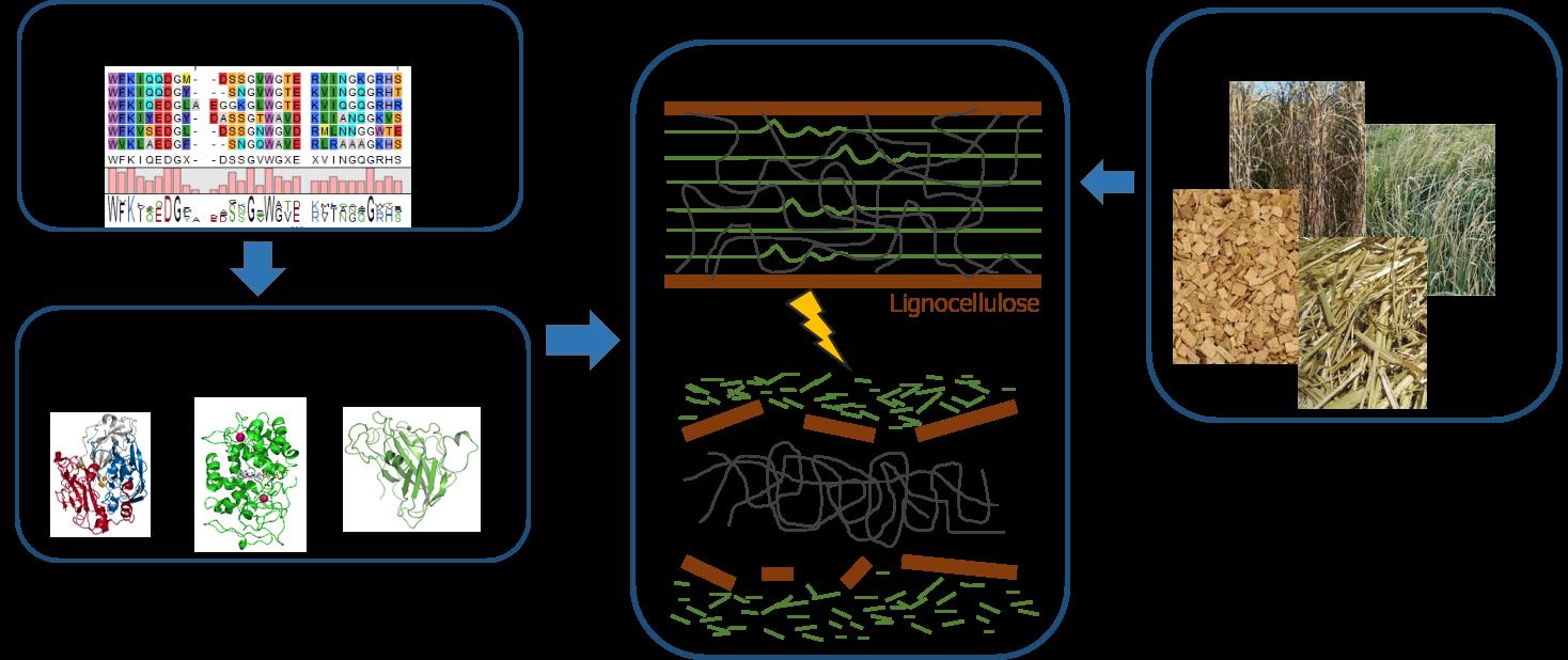 Abbilung BioDeg